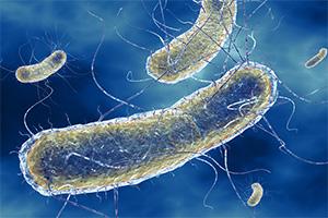 легионеллы бактерии